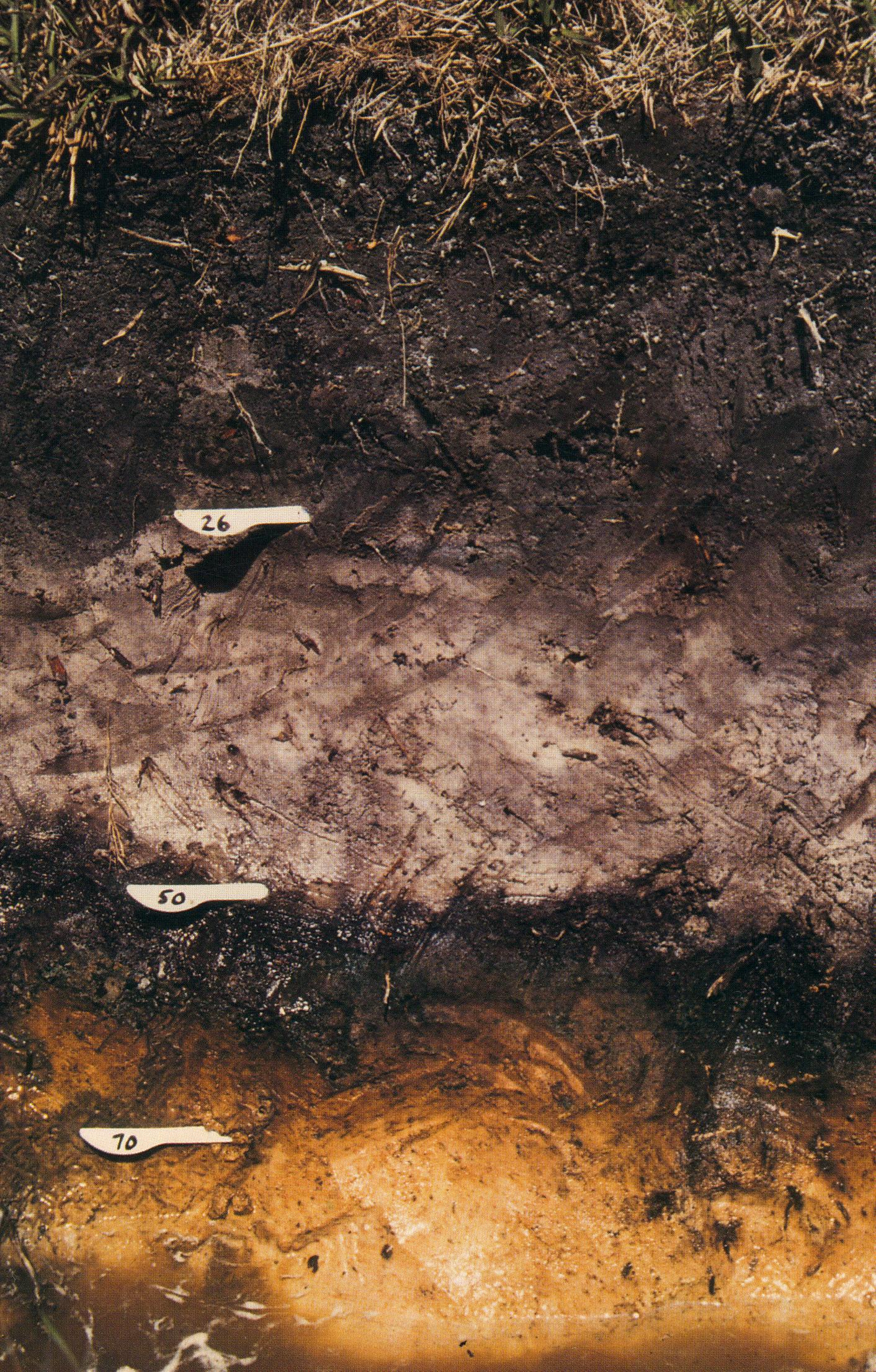 Podsol images frompo for Soil definition